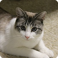 Adopt A Pet :: Charlie - Medina, OH