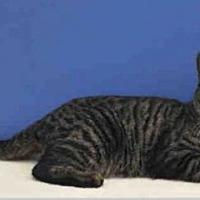 Adopt A Pet :: Hawk - Naples, FL