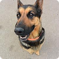 Adopt A Pet :: Sabrina - Meridian, ID
