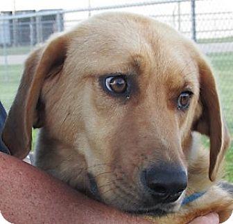 Labrador Retriever Mix Dog for adoption in Germantown, Maryland - Sophie
