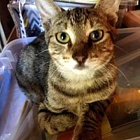Adopt A Pet :: Dean - Waggaman, LA