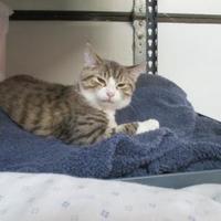 Adopt A Pet :: Penny Lou - Erie, PA