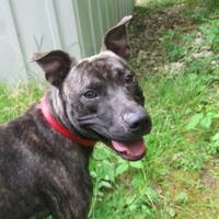 Adopt A Pet :: Camou - Greenville, PA