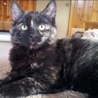 Adopt A Pet :: Briar Rose - Mountain Center, CA