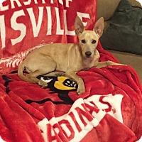 Adopt A Pet :: Hannah - Hazard, KY