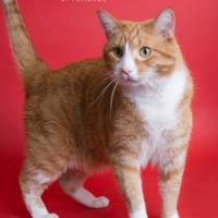 Adopt A Pet :: Brody - Wausau, WI