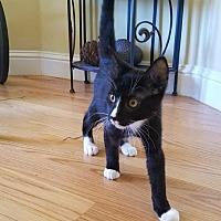 Adopt A Pet :: James Oliver - San Jose, CA