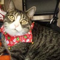 Adopt A Pet :: Shaggy - Denver, CO