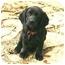 Photo 1 - Basset Hound Mix Puppy for adoption in Muldrow, Oklahoma - Diana