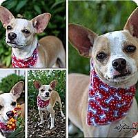Adopt A Pet :: Spock - Bartow, FL