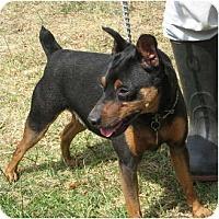 Adopt A Pet :: Teddy - Sun Valley, CA