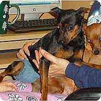 Adopt A Pet :: Addie - Florissant, MO