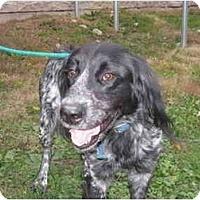 Adopt A Pet :: Edward Cullen - Columbus, OH