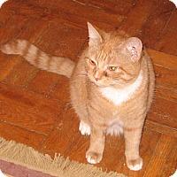 Adopt A Pet :: Jessie-Discounted Adoption Fee - Colmar, PA