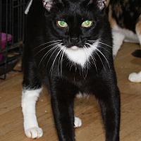 Adopt A Pet :: Mya - Torrance, CA