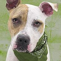 Adopt A Pet :: Nanook - Cincinnati, OH