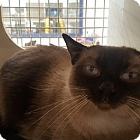 Adopt A Pet :: Cleo - Woodland Hills, CA