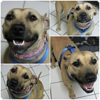Adopt A Pet :: Stacy - Forked River, NJ