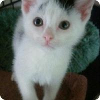 Adopt A Pet :: Sheldon - Centerton, AR