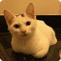 Adopt A Pet :: Smudge - Oviedo, FL