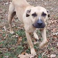 Adopt A Pet :: Waco - Savannah, TN