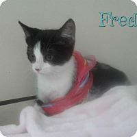 Adopt A Pet :: Fred - Harrisville, WV