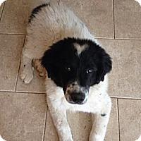 Adopt A Pet :: Elliot - Albany, NY