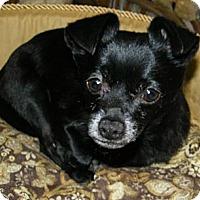 Adopt A Pet :: Tater - Mt Gretna, PA