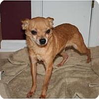 Adopt A Pet :: Teddy - Westfield, IN