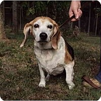 Adopt A Pet :: Lady - Indianapolis, IN