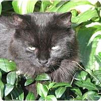 Adopt A Pet :: Lily - Richfield, OH