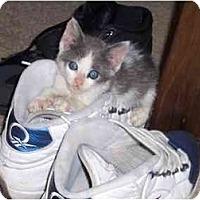 Adopt A Pet :: Popeye - Davis, CA