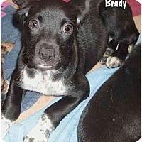 Adopt A Pet :: Brady - Woolwich, ME