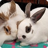 Adopt A Pet :: Galadriel - Los Angeles, CA