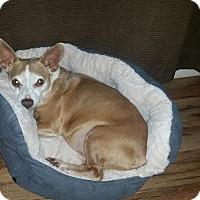 Adopt A Pet :: Phantom - Washington DC, DC