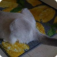 Adopt A Pet :: Shay - Delmont, PA