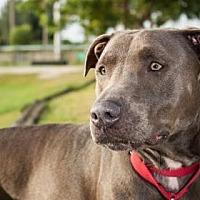 Adopt A Pet :: Cece - Loxahatchee, FL