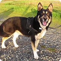 Adopt A Pet :: Bear - Pleasant Grove, CA