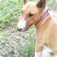 Adopt A Pet :: ReRun - ADOPTION PENDING!! - Antioch, IL