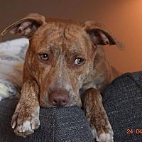 Adopt A Pet :: Sunshine - Germantown, OH