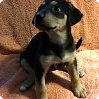 Adopt A Pet :: Patrick - Buena Park, CA