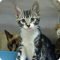 Adopt A Pet :: 10311391 - Brooksville, FL