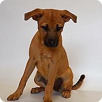 Adopt A Pet :: PEEBLES - New Iberia, LA