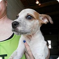 Adopt A Pet :: Sissy Spacek - Mission, KS