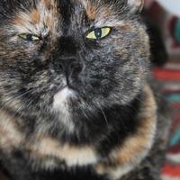 Adopt A Pet :: Kia - McKinney, TX
