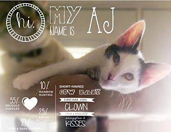 Domestic Shorthair Kitten for adoption in Benbrook, Texas - AJ