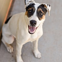 Adopt A Pet :: Gypsy - PORTLAND, ME