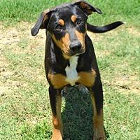 Adopt A Pet :: Finnegan D3804 - Shakopee, MN