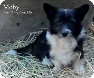 Corgi Mix Dog for adoption in New Jersey, New Jersey - Bordentown NJ - Moby
