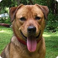 Adopt A Pet :: Sammy -- VIDEO! - Baltimore, MD
